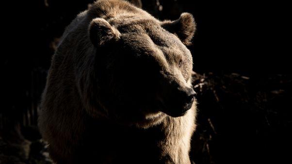Avistado un oso en Portugal por primera vez en casi 200 años