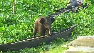 Baby elephant rescued from lake in northeastern India