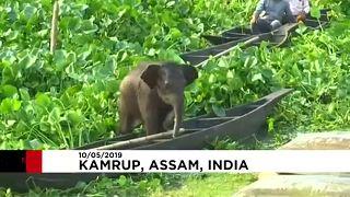 Kleiner, verlorener Elefant