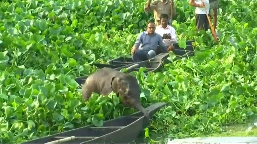عملیات نجات بچه فیل جدا مانده از مادر در هند