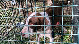 Lost pup survives a year in the wild 'eating rabbits'