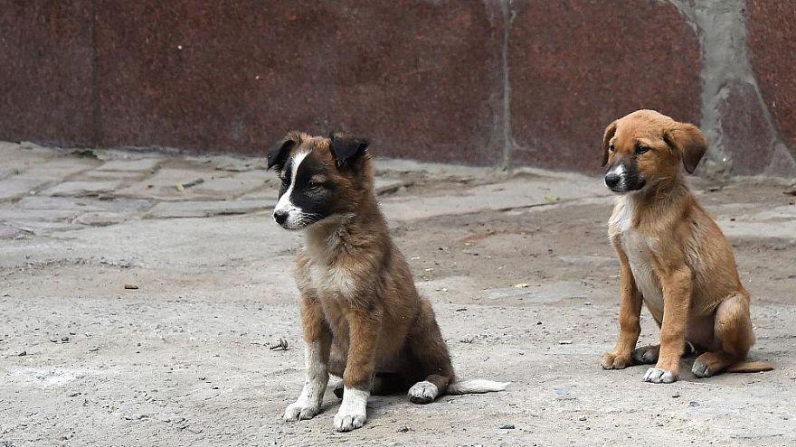 Yavru köpek tarafından ısırılan Norveçli turist kuduzdan öldü