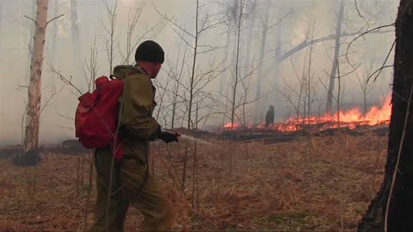 Waldbrände wüten in Sibirien: Schon 46.000 Hektar in Flammen