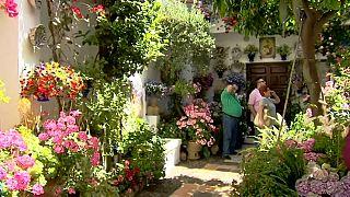 Córdoba se inunda de flores para su concurso de patios