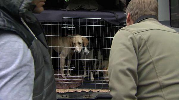 Polizei stoppt illegalen Tierhandel in Österreich