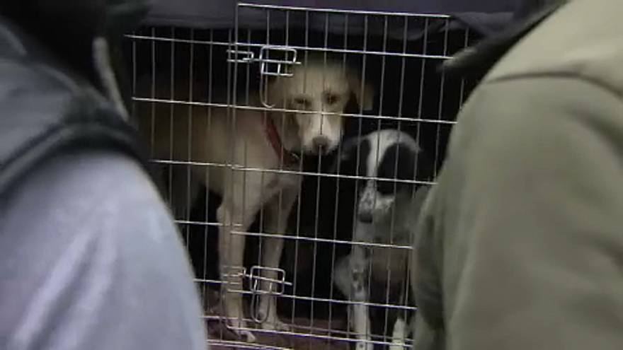 Állatcsempészek akadtak horogra Ausztriában