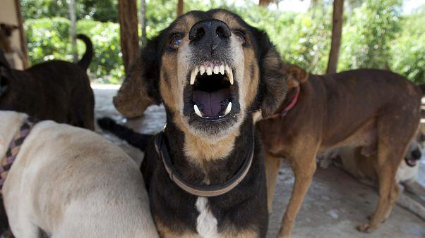 الولايات المتحدة تمنع دخول الكلاب المصرية إلى أراضيها
