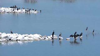 Renascimento do lago Karla