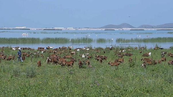 Спасение озера Карла в Фессалии
