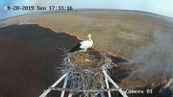 Пожары в РФ: аист не покидает гнездо