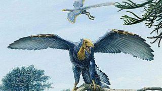 Günümüz kuşlarına en çok benzeyen dinozor fosili keşfedildi