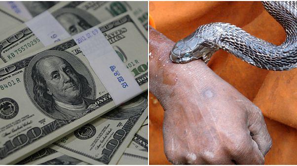100 مليون دولار للبحث عن دواء للدغات الثعابين