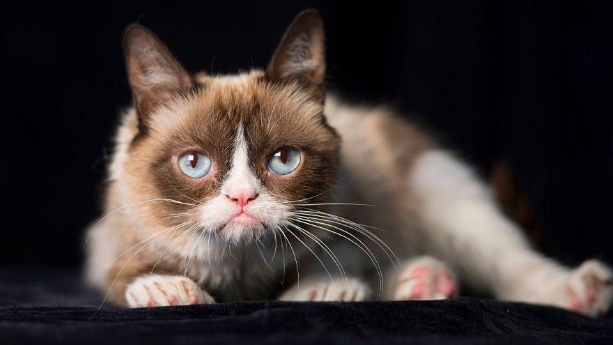 القط الشهير غرومبي
