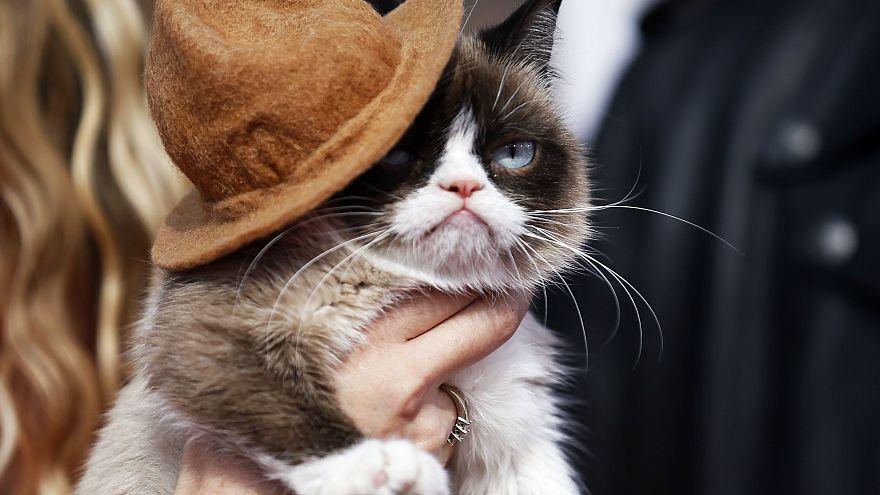 Grumpy Cat en Los Ángeles, California, el 13 de abril de 2014.
