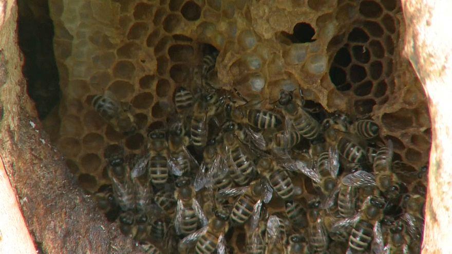 Journée mondiale des abeilles : une espèce fortement menacée