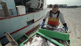 Small-scale Danish fishermen push back against industrial fishing