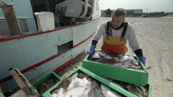 Small-scale Danish fishermen push back against industrial fishing