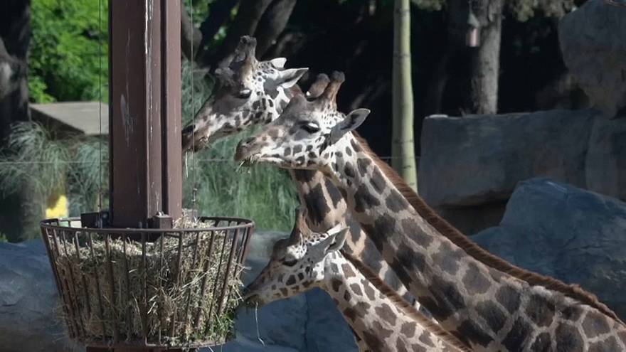 Barcelona's town council voted on 3 May to modify the zoo's bylaws