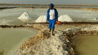 Diouf employs between 10 and 20 men and women on her marshland
