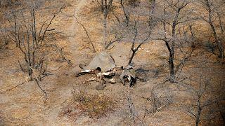 Botswana levanta proibição da caça aos elefantes