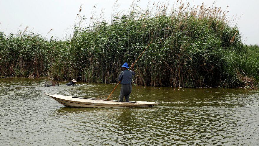 صياد أسماك مصري في النيل