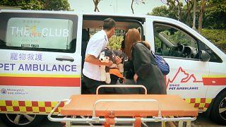 L'ambulanza per gli animali domestici