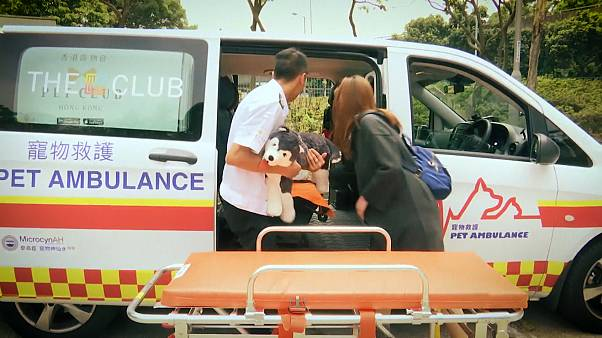 An ambulance service for pets for the first time in Hong Kong