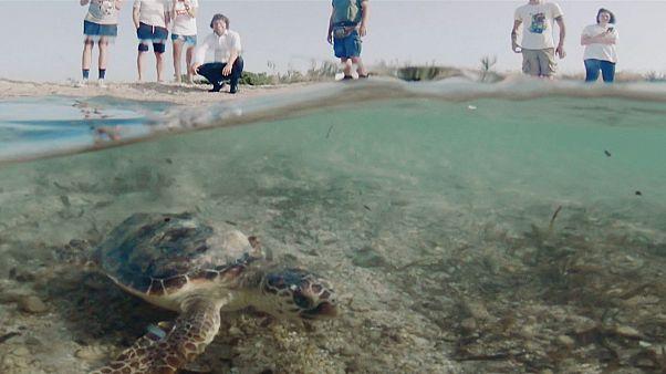 Απουλία: Το Τόρε Γκουασέτο και η προστασία του θαλάσσιου οικοσυστήματος