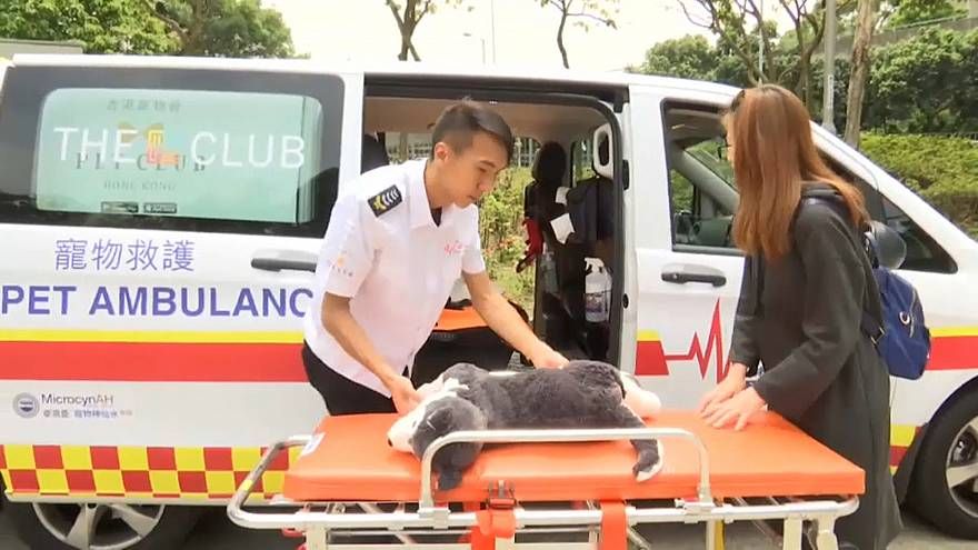 The pet ambulance service is run by animal lovers