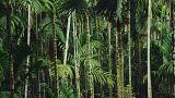Estée Lauder launches sustainable scheme to tackle palm oil production