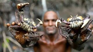 Klimawandel: Fischer in den Mangrovenwäldern in Gefahr