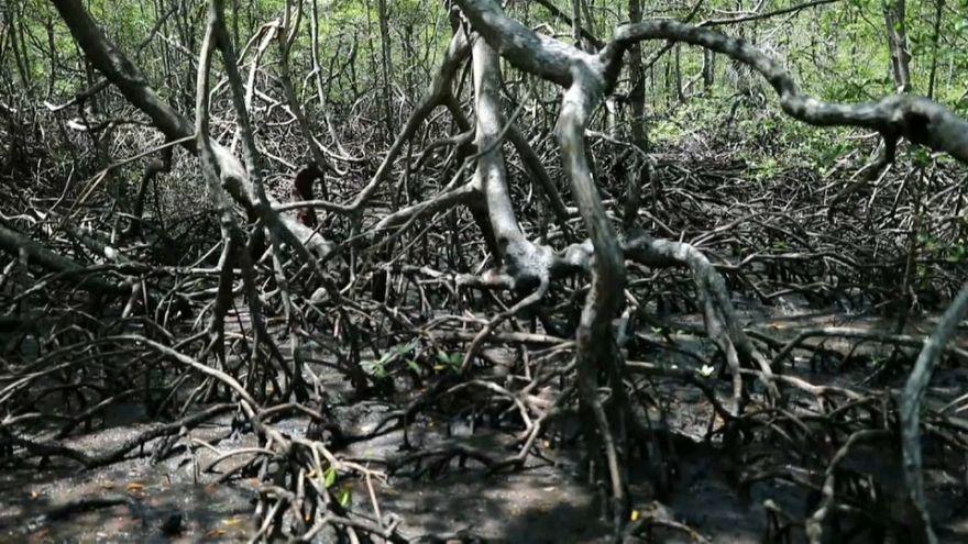 El cambio climático condena a muerte a los manglares brasileños