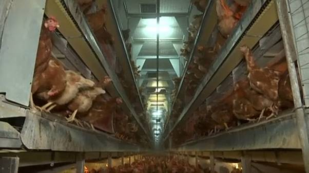 Un million de signatures contre les cages pour les animaux