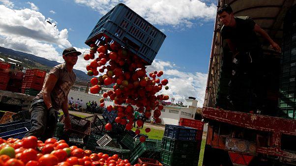 Video | Kolombiya'nın 'Tomatina' festivalinde tonlarca domates havada uçuştu