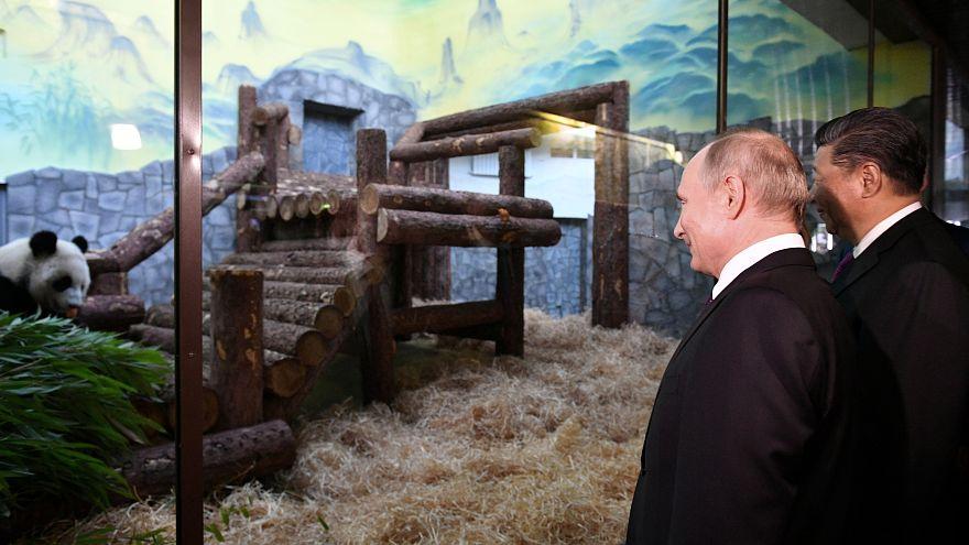 الرئيسان الروسي والصيني يزوران حديقة موسكو التي تسلمت من الصين زوجي باندا