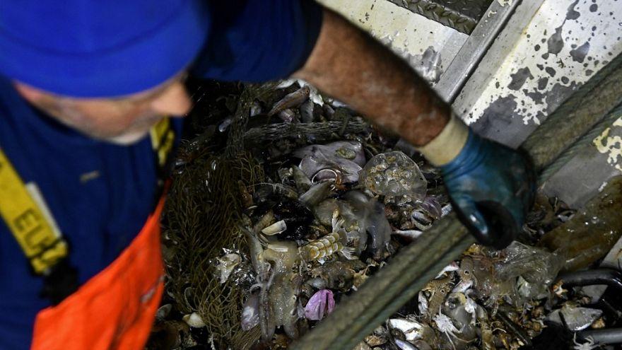 İtalyan balıkçılar geri dönüşüm için Akdeniz'in çöplerini topluyor