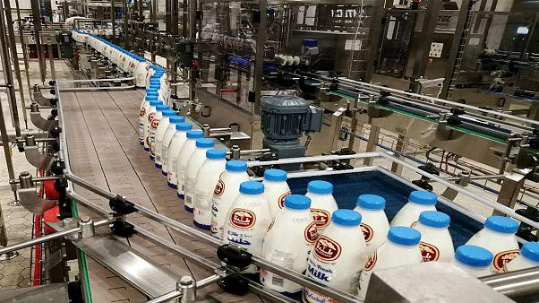 قطر موفق به خودکفایی در تامین شیر و صادرات آن شد