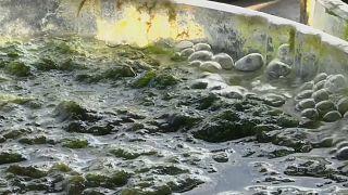 عملية خلط المواد البحرية لاستخراج البوليمرات