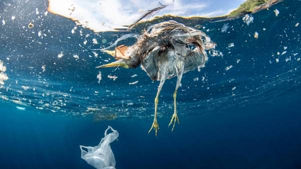 Dead bird and plastic bag floating in the ocean.