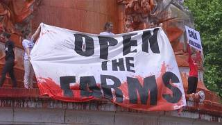 شاهد: ناشطو حقوق الحيوانات في فرنسا يطالبون بإغلاق المسالخ لتوفير حماية أكبر للحيوانات
