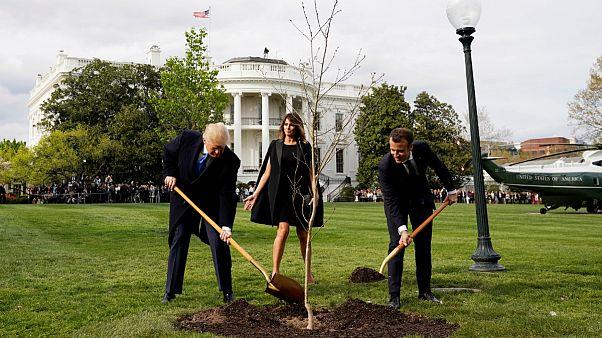 درخت دوستی ترامپ و ماکرون خشکید