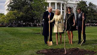 Ricordate l'albero piantato da Macron e Trump? Beh, è morto.
