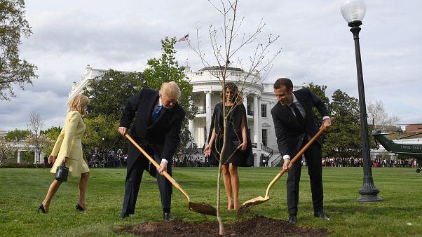 Macron ile Trump'ın dostluk ağacı kurudu