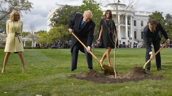 Has the tree symbolising the Trump/Macron friendship died?