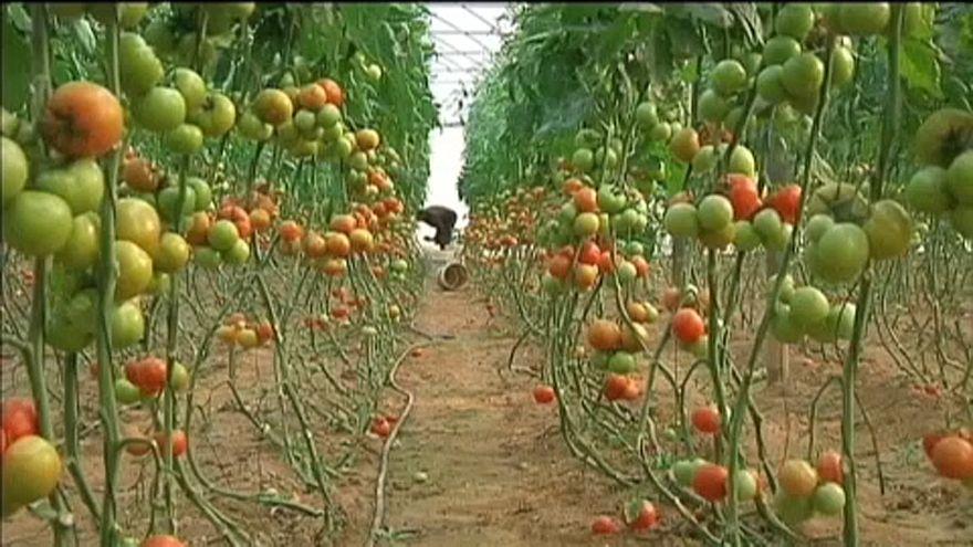 Метить овощи из еврейских поселений