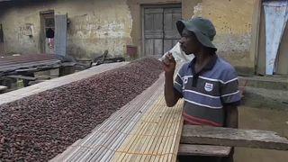 Ghana y Costa de Marfil suspenden sus ventas de cacao en busca de un precio justo