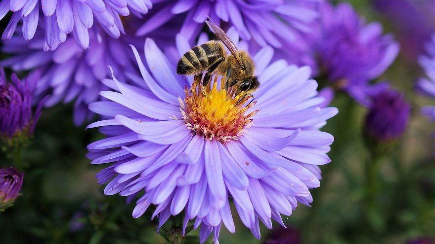 Auch in Osteuropa sterben die Bienen