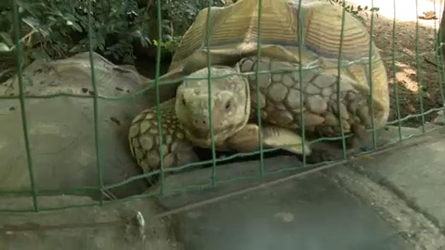 Elfogta a rendőrség a teknőst agyonverő nőt