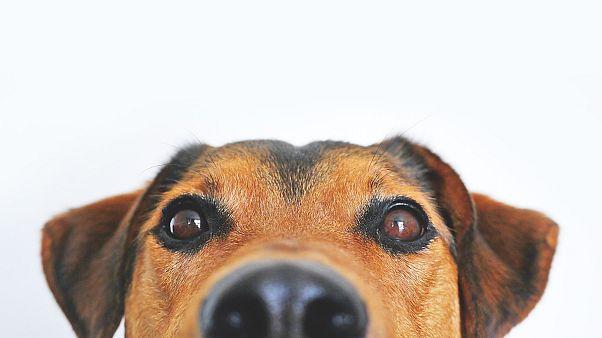 تسميم الكلاب الضالة في الكويت يشعل مواقع التواصل وانقسام بين مؤيد ومعارض