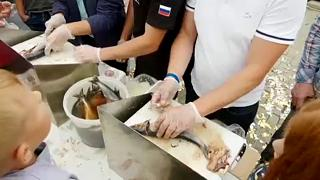 """سمكة """"هيرنغ"""" تحشد لمهرجانٍ تقيمه بلدة روسية لمرور 9 قرون على تأسيسها"""